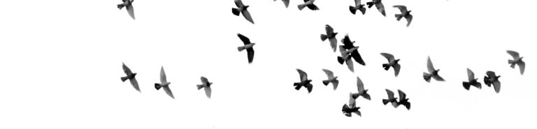 A photo of birds flying